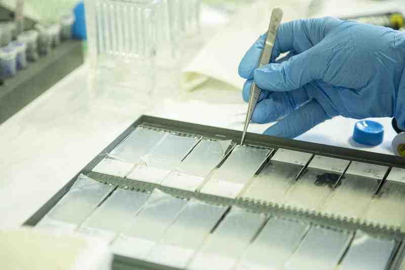 ricerca vetrino laboratorio